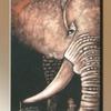 08. - Elefánt fej
