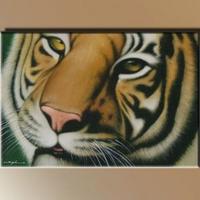 12. - Tigris fej -