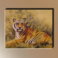13. - Tigris -
